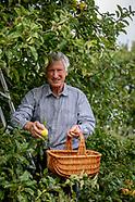 Vincent Obbard apples