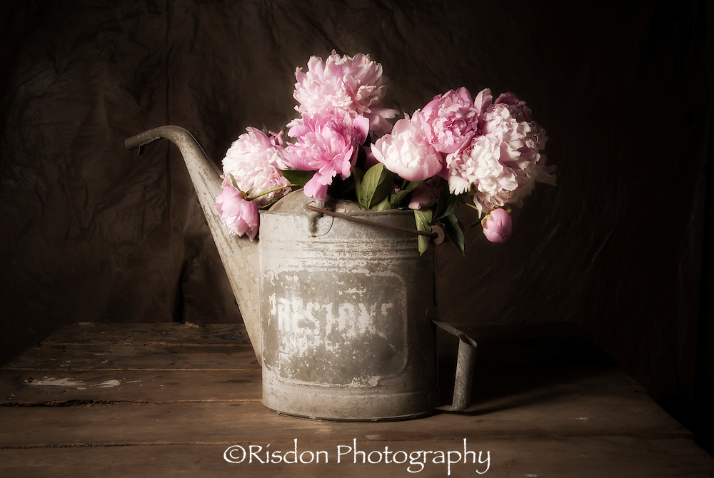 Still life photography of Pink Peony in antique watering can