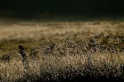 Patos de Minas_MG, 02 de Fevereiro de 2010..Historias - Cachaca Leblon..Na foto, amanhecer nos arredores da fazenda...Foto: LEO DRUMOND / NITRO