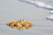 Ghost Crab reflection on a Outer Banks beach in NC.