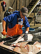 "A worker fillets a halibut, which is a flatfish, genus Hippoglossus, from the family of the right-eye flounders (Pleuronectidae). In Alaska, the town of Homer claims to be the ""halibut fishing capital of the world."" Village nicknames include ""Homer - a quaint little drinking village with a fishing problem"" [bumper sticker] and ""the end of the road."" Homer is the southernmost town on the contiguous Alaska highway system. Homer is at the end of Sterling Highway (part of Alaska Route 1) on Kenai Peninsula, on the shore of Kachemak Bay, Alaska, USA. For licensing options, please inquire."