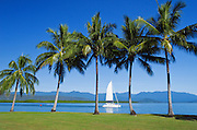 Sailing boat heading to the Great Barrier Reef past palm trees, blue sky and the mountains in Port Douglas, Queensland, Australia.