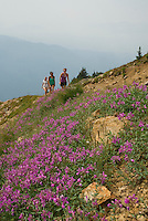 The rocky trails of Whistler Mountain are a great hike.