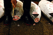 "A buyer at the world's biggest fish Market in Tsukiji, Tokyo checks the quality of the meat of a large tuna that are to be auctioned at the market. More than 2,300 tons of fish -- about one-third of the total consumed in Japan -- passes through Tsukiji each day and the market offers more than 450 varieties of marine products. The market, which dates back almost 75 years, is slated to move to a high-tech site on a man-made island in Toyosu, which is well-documented as being contaminated with benizine. Not that Tsukiji is much better off -- many buildings in the aging site are stuffed with asbestos. ""Choose your poison,"" says one Tsukiji official. The new site, which the government plans to be readied by 2012, will be significantly larger, with more room for off-loading and for sellers to display their goods. The current location, says one official, is too cramped and collisions between motorised carts and pedestrians means accidents occur almost daily. Meanwhile, with fish sales down, it is becoming more difficult to justify Tsukiji's prime location and property developers are keeping a close watch on Tsukiji land, which is just a few blocks from the ritzy Ginza district of Tokyo, where per-meter land prices are among the highest in the world...The move to the new Toyosu location, meanwhile, has been at the center of heated debate -- clean-up operations alone are estimated to cost ¬?67 billion (around US$660 million), with a further ¬?450 billion to build a new marketplace. Big wholesalers favour the move, but the 1,600-plus merchants mostly are against it. Yoshiharu Kikuraku, a Tsukiji storeowner who began working at the market 60 years ago, expresses bewilderment at the plans, saying that the name Tsukiji itself has become synonymous with the world's best and most eclectic selection of fish. ""This place has a long tradition. Why break it and start from scratch all over again?"" he says."