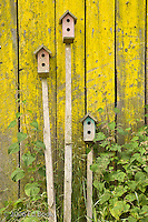 Three birdhouses on long stakes lean against a weathered wall covered with yellow moss.