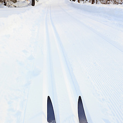 Cross country skis at the Notchview Reservation in Windsor, Massachusetts. The Trustees of Reservations.