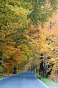 Straße durch Herbst Wald bei Liebethal, Sächsische Schweiz, Elbsandsteingebirge, Sachsen, Deutschland | road through autumn forest near Liebethal, Saxon Switzerland, Saxony, Germany