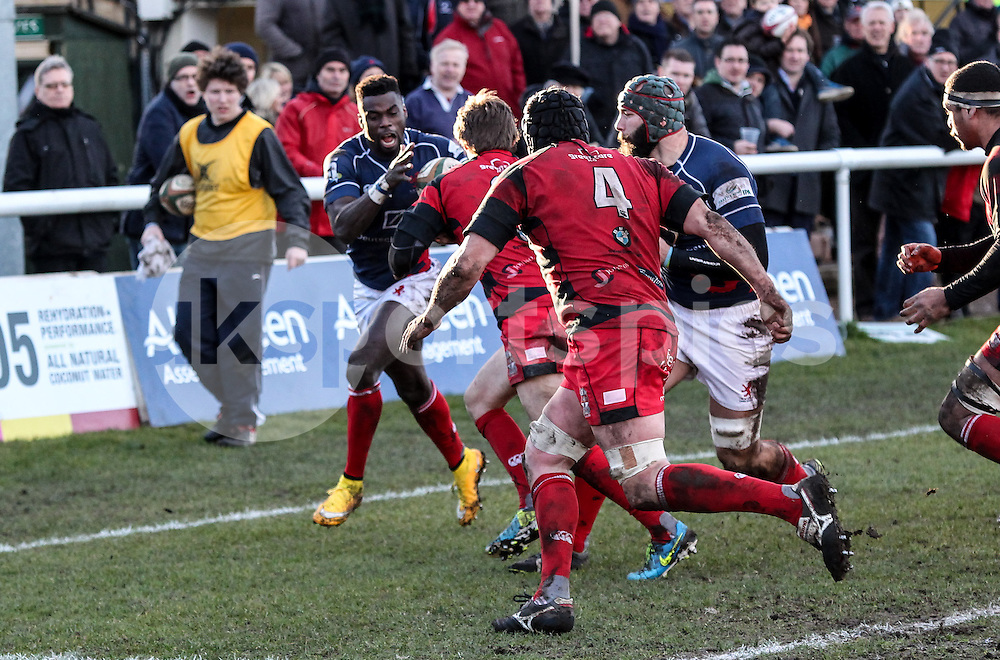 Matt Williams in action during the Green King IPA Championship match between London Scottish &amp; Moseley at Richmond, Greater London on 21st February 2015<br /> <br /> Photo: Ken Sparks   UK Sports Pics Ltd<br /> London Scottish v Moseley, Green King IPA Championship, 21st February 2015<br /> <br /> &copy; UK Sports Pics Ltd. FA Accredited. Football League Licence No:  FL14/15/P5700.Football Conference Licence No: PCONF 051/14 Tel +44(0)7968 045353. email ken@uksportspics.co.uk, 7 Leslie Park Road, East Croydon, Surrey CR0 6TN. Credit UK Sports Pics Ltd