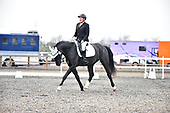 74 - 03rd Dec - Team Dressage