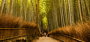 Cycling through bamboo forest, Kyoto, Japan.