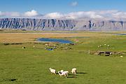 Typical landscape in the Westfjords. Patreksfjördur. Iceland.
