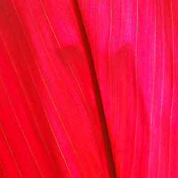 Textures is Al Harty's artistic and creative photography of flowers and leaves on Maui, Hawaii.