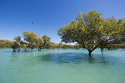 In amongst the mangroves in Dugong Bay on the Kimberley coast.