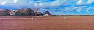 Potato Field, Oregon Road, Cutchogue, New York, North Fork, Long Island