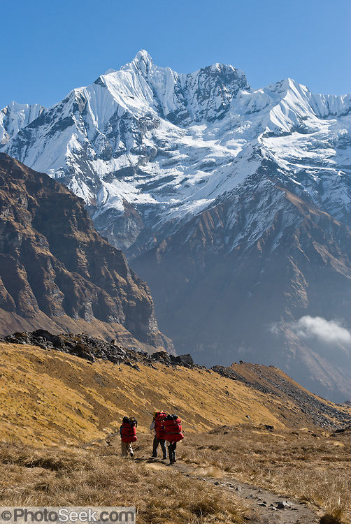Porters carry large red packs in the Annapurna Range of Nepal, on the Annapurna Sanctuary trail, beneath the sharp peak of Gandharba Chuli (20,500 feet / 6248 meters), which is fluted with ice ridges.