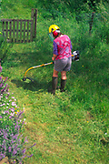 AREHXE Woman using a strimmer to cut long grass lawn in her cottage garden during summer, Suffolk, England