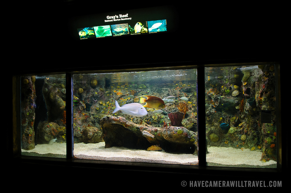An exhibit of Gray's Reef National Marine Sanctuary. The exhibit is part of Washington DC's National Aquarium. The National Aquarium is in the basement of the Department of Commerce Building, where it has been housed since 1932. Much smaller and less well known than its affiliated facility in Baltimore, Washington's National Aquarium consists of a series of tanks illustrated various types of marine environments, with special emphasis on the many marine sanctuaries in U.S. marine territory.