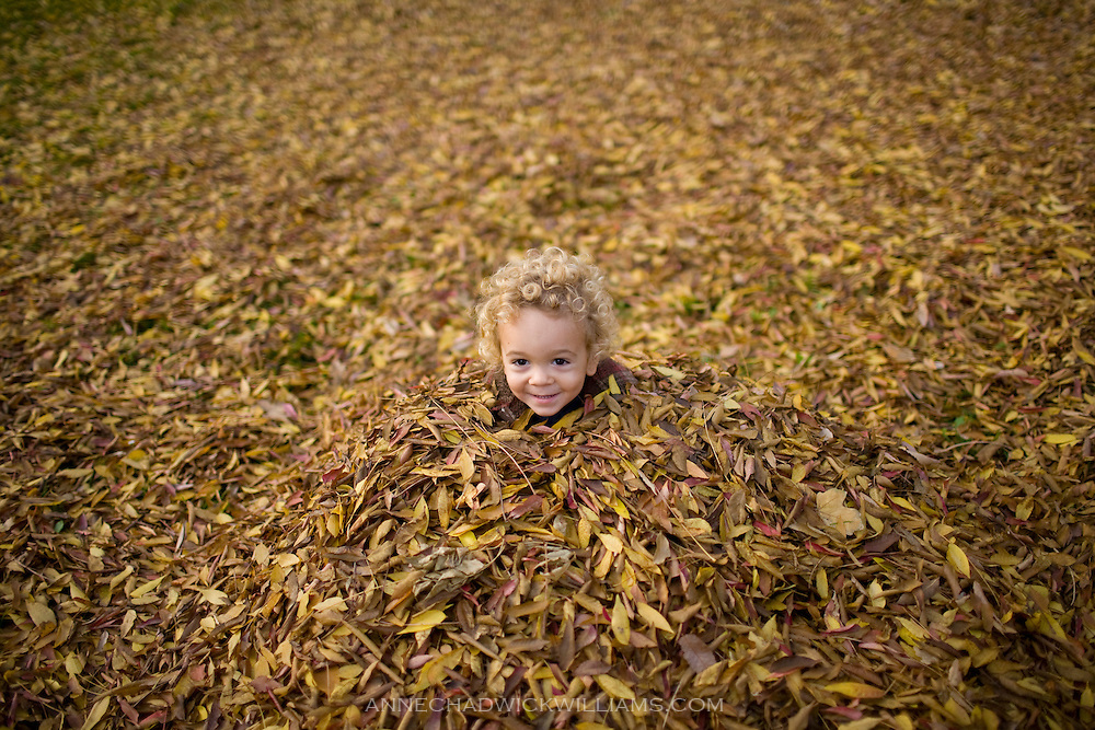 A boy in leaf pile during fall in beautiful Land Park in Sacramento, CA.