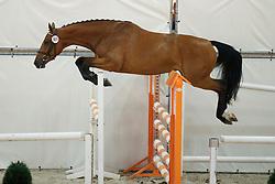 101, Haraminka P<br /> Vrijspringen Nationale Merriekeuring, 3 jarige springmerries <br /> KWPN Paardendagen Ermelo 2015<br /> © Hippo Foto - Dirk Caremans