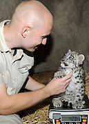 Snow Leopard Cub Born at Brookfield Zoo<br /> <br /> Matt Weibler, a senior keeper for the Chicago Zoological Society, weighs a 2-month-old snow leopard cub that was born at Brookfield Zoo on June 13. Since his birth the cub, which weighs about 10 pounds, has been with his mom, Sarani, in an off-exhibit den. Until the cub is 3 months old, he will remain there bonding with his mom before making his public debut in mid-September. Snow leopards are listed as an endangered species by the International Union for Conservation of Nature (IUCN). Their numbers, which are estimated to be between 3,500 and 7,000 in the wild, are declining due to human influence such as poaching for medicinal markets and hides, depletion of their prey base, retribution killing following livestock losses, residential and commercial development, and civil unrest.<br /> ©Brookfield Zoo/Exclusivepix