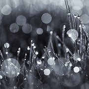 """""""Morning Magic"""" monochrome<br /> <br /> Magical bokeh in black and white!"""