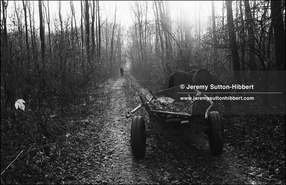 THE STANESCU FAMILY ILLEGALLY COLLECTING WOOD FROM THE FOREST NEAR TO THE CAMP. SINTESTI, ROMANIA. NOVEMBER 1996..©JEREMY SUTTON-HIBBERT 2000..TEL./FAX.+44-141-649-2912..TEL. +44-7831-138817.