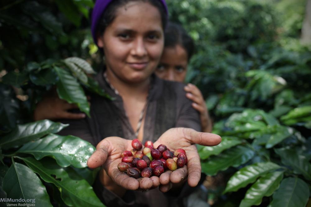 Yolanda Elizabeth Gutiérrez Alvarado, migrant worker from Nicaragua, picks coffee for a COOPEAGRI-affiliated plantation. COOPEAGRI, San Isidro de El General, Pérez Zeledón, San José, Costa Rica. August 27, 2012.
