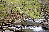 66745-039.02 Middle Prong of the Little Pigeon River in spring, Greenbrier Area, Great Smoky Mountain National Park, TN