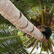 Boy climbs coconut tree in Coron, Palawan, Philippines