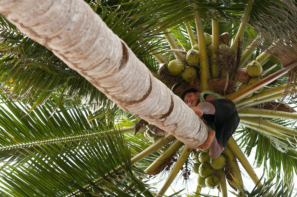 Boy climbs coconut tree in Coron, Palawan, Philippines