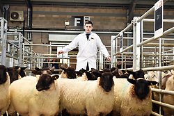 Auction auctioneer livestock market farm farming sheep Cumbria working UK meat rural economy economic