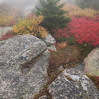Large boulders, wild blueberries and evergreens endure the fog and wind atop Cadillac Mountain, Acadia NP, Maine