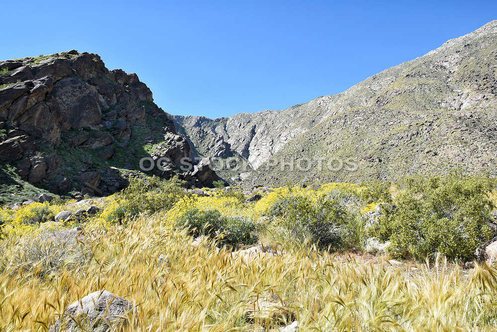 Tahquitz Canyon View Palm Springs