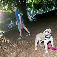 A dog takes a break from his frisbee and poses for the camera at the shared dog park at Wallace Park (NW 25th Ave and Raleigh St.) 6:51am