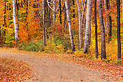 Image of a road in the White Mountains National Forest near Franconia Notch in the fall, New Hampshire, American Northeast