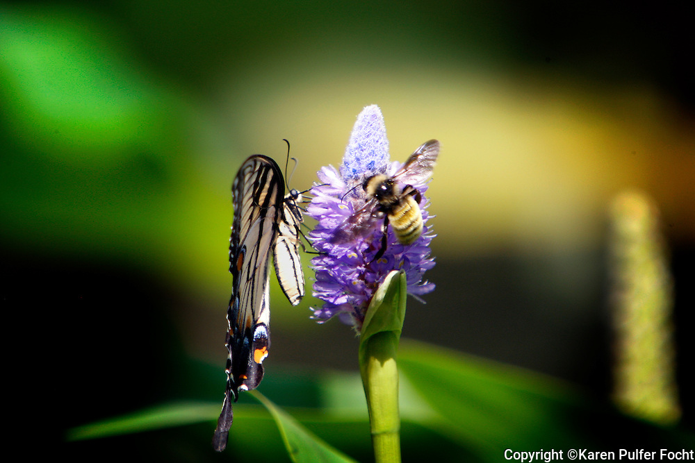 A butterfly and a bee work harmoniously together on a flower. Teamwork.
