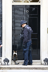 © Licensed to London News Pictures. 14/01/2019. London, UK. An armed police officer knocks on the door of Downing Street this morning to let Larry the cat in. Photo credit: Andrew McCaren/LNP