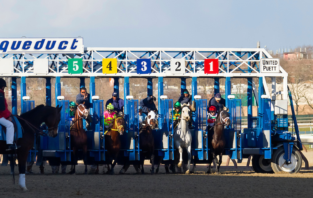 """The first of 9 shots of the 2011 Excelsior Handicap, run in April. The grey horse, """"Inherit the Gold"""" was the easy winner. His jockey was Eddie Castro."""