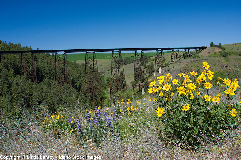 Wildflowers and a steel railroad trestle over Lawyers Canyon on the Camas Prairie of North Central Idaho. Built in 1908, this trestle is 296 ft. high and 1500 ft. long.