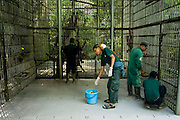 The FZS worker giving some treatment for Orang Utan inside center of reintroduction at Sungai Pengian station, jambi Indonesia. Orang Utan is one of endangered animal that live in Indonesia and Malaysia forest. Their DNA is 97% same like human