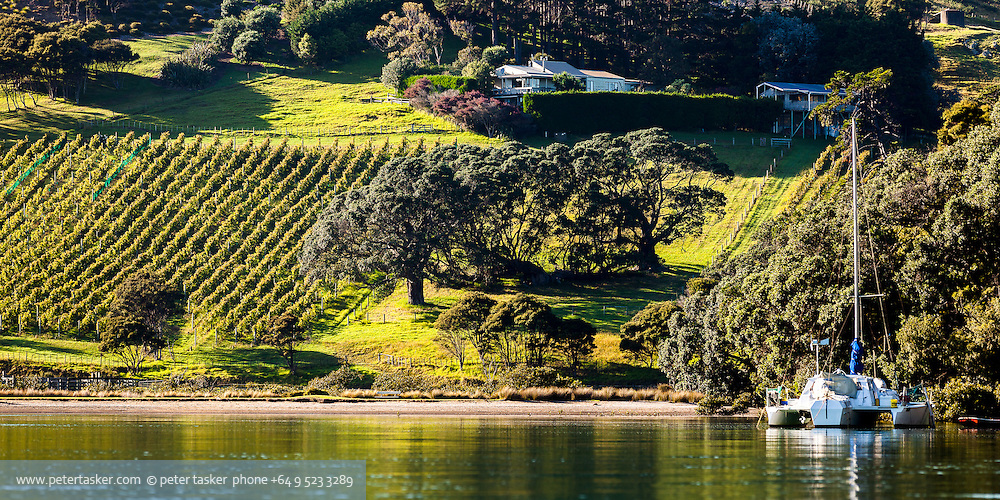 Vinyard on coast of Rocky Bay, Waiheke Island, New Zealand.
