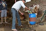 Shantilal collects cow urine to make organic fertiliser on his farm Madhya Pradesh, India.