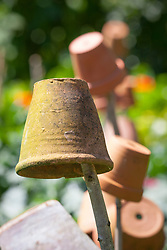Upturned flower pots placed on canes to protect eyes and control slugs and snails