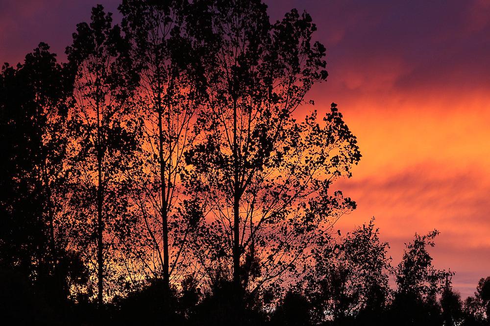 Sunrise, Sefton, New Zealand, Friday, March 26, 2010. Credit:SNPA/Pam Johnson