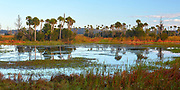 Scenic view on a winter morning in Orlando Wetlands Park, located in central Florida