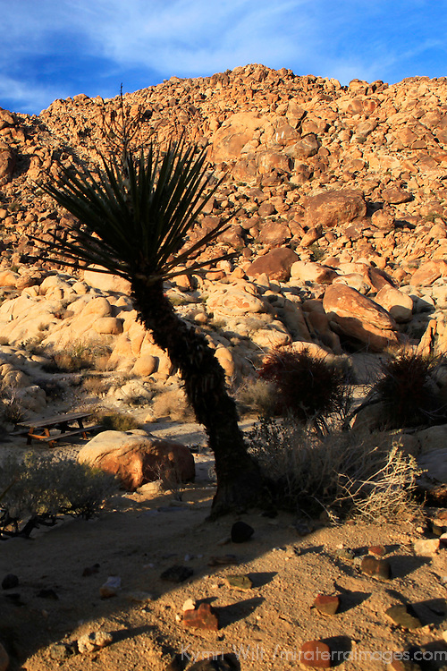 USA, California, Joshua Tree. Desert landscape of Joshua Tree.