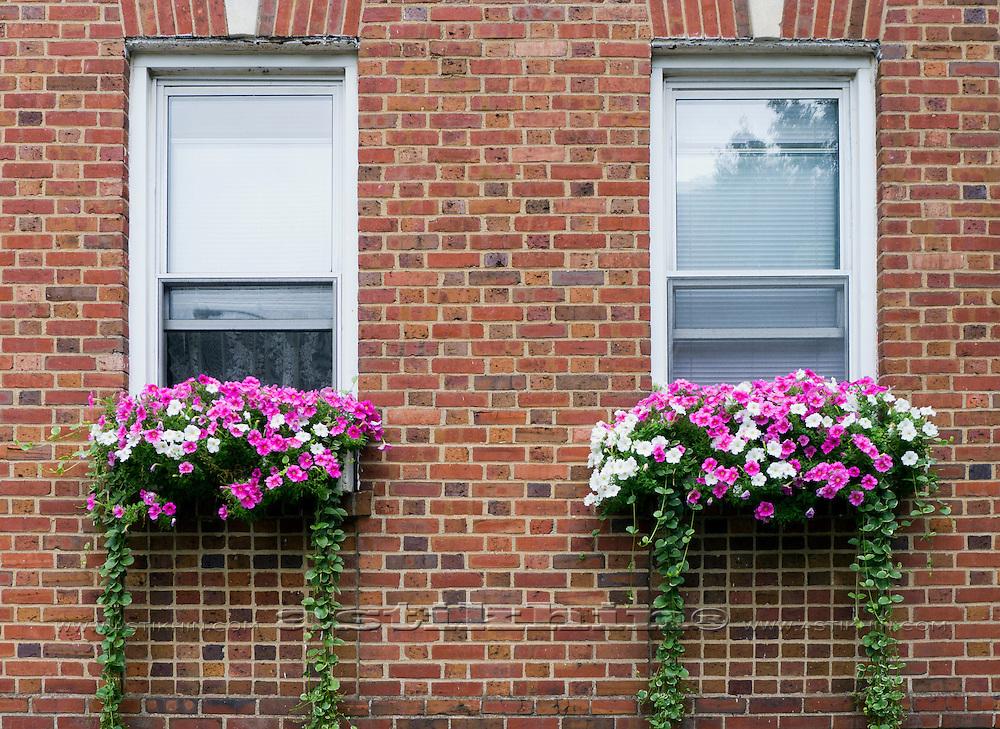 Windows in Bay Ridge, Brooklyn New York City