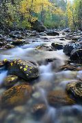 Kootenai Creek in Autumn, Bitterroot National Forest, Montana