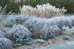 Bronze swan sculptures amongst grasses on a frosty morning in winter.  Design: John Massey, Ashwood Nurseries