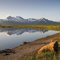 USA, Alaska, Katmai National Park, Brown Bears (Ursus arctos) resting along river along near Hallo Bay at sunset on summer evening